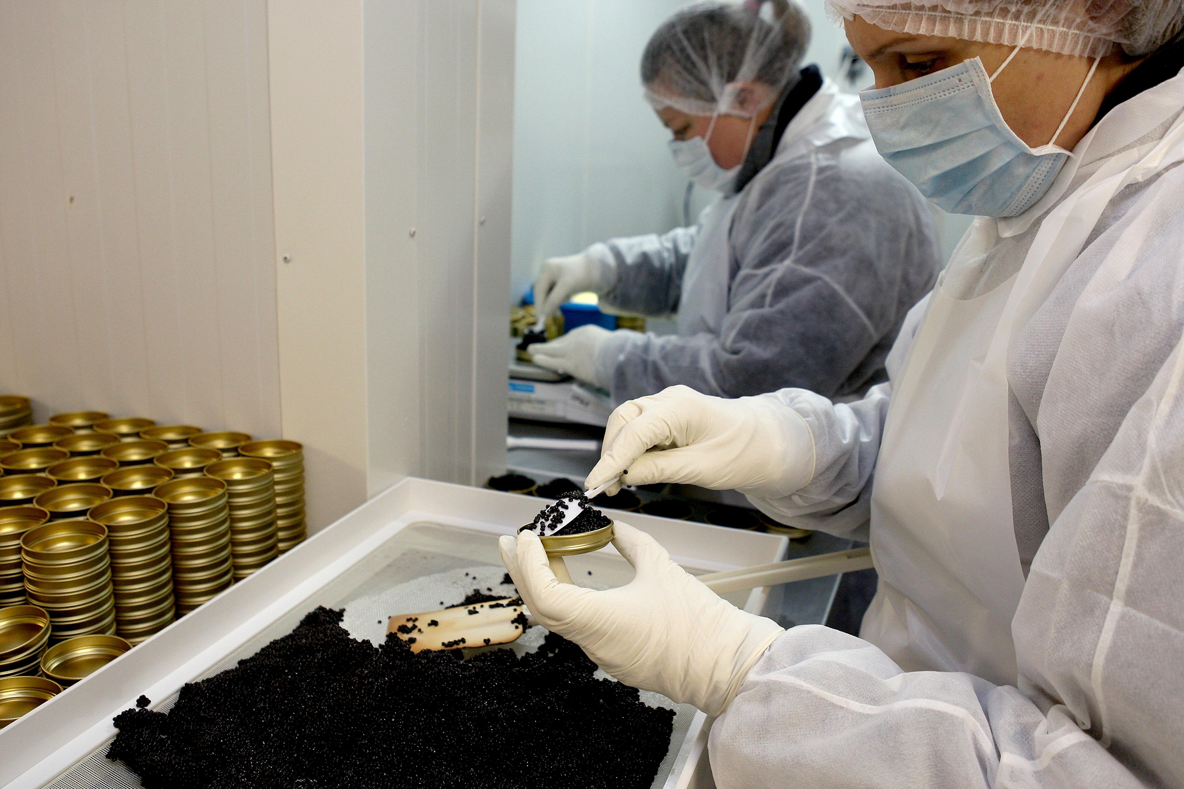 Laboratoire caviar Perlita